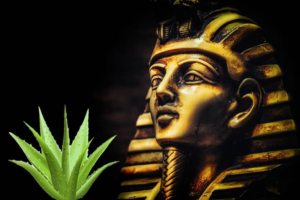Pharaon avec plante d'aloe vera